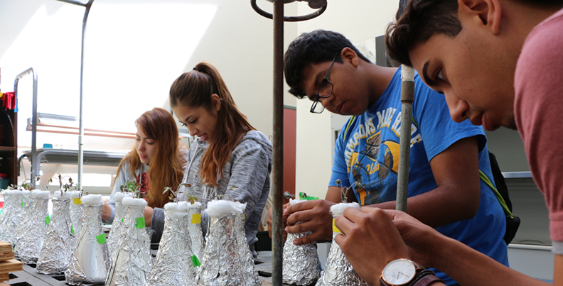 Students observe tomato experiment